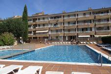 Apartament en Estartit - Estudi Apartament Sol 317